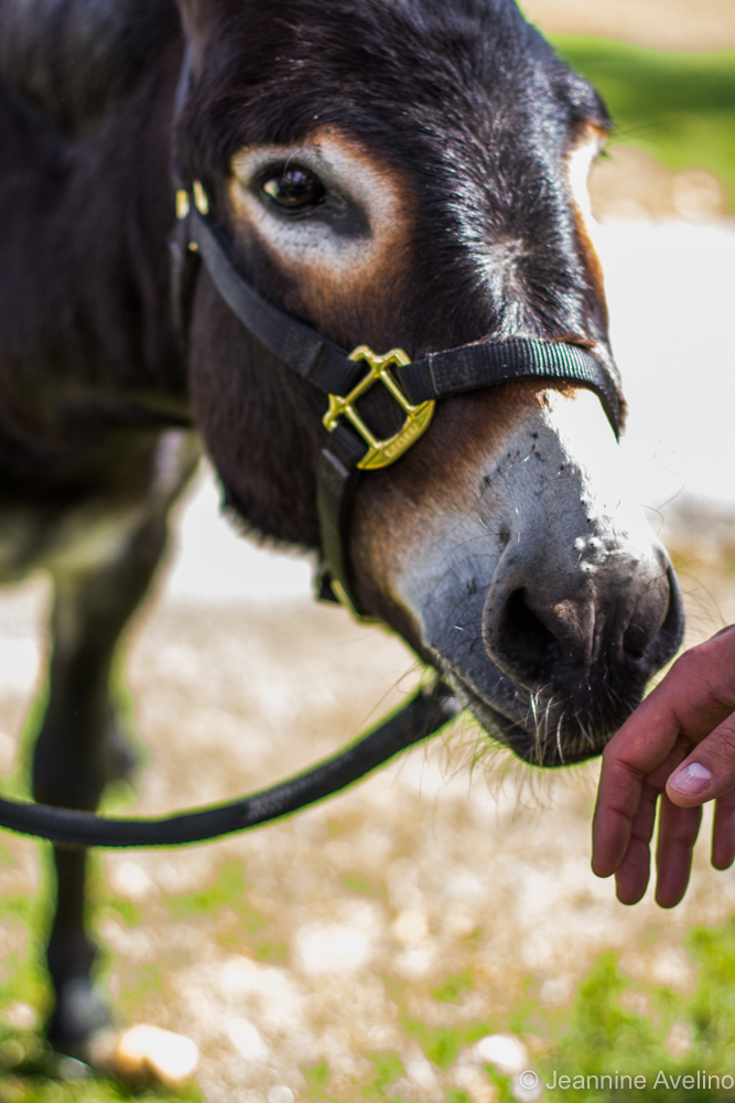 Donkey Cross - photo by Jeannine Avelino
